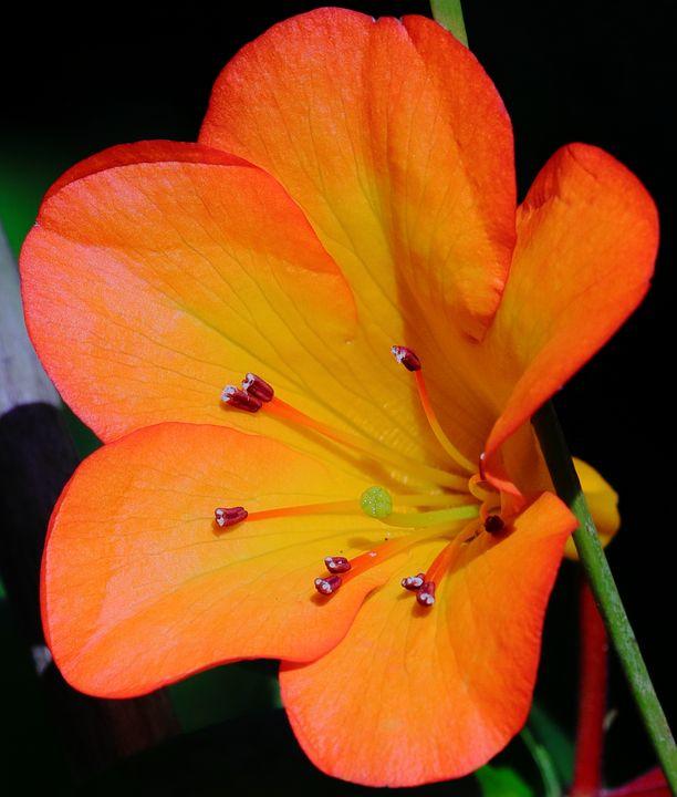 orange flower - Preus Photography