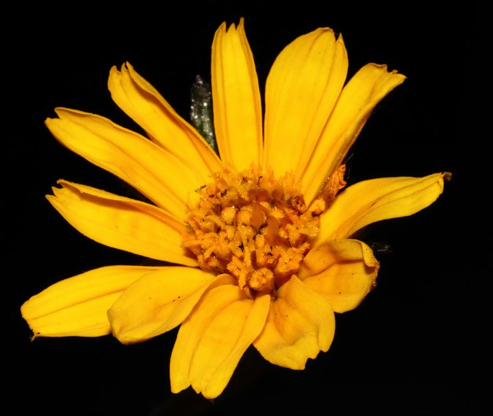 wild flower - Preus Photography