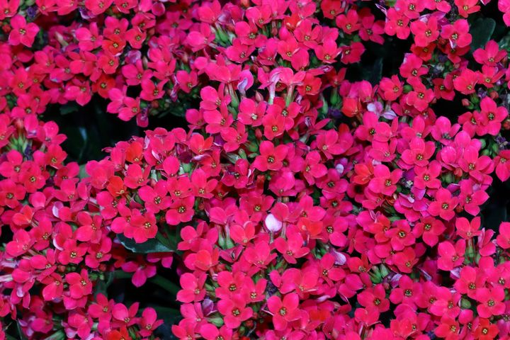 red flowers - Preus Photography