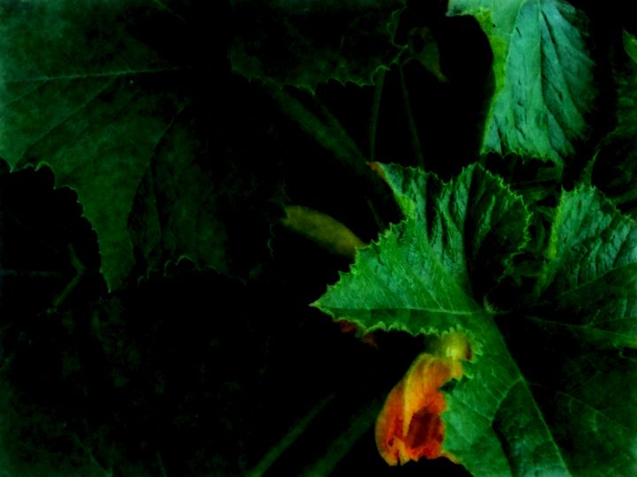Sunlit Squash Leaves - Double Moon Art