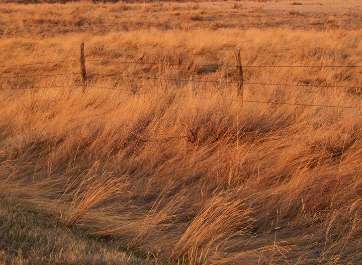 Golden Grass Sunset - Double Moon Art