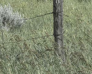 Fencepost, Grasses and Wire