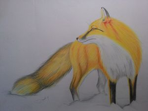 """Fox"" drawing pencil on paper"