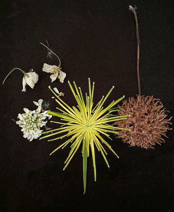seedpods and papyrus - Jocelyn Chemel