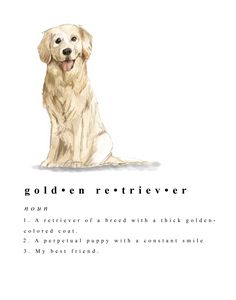 Definition of a Golden Retriever