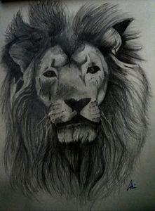 Lion pencil sketch