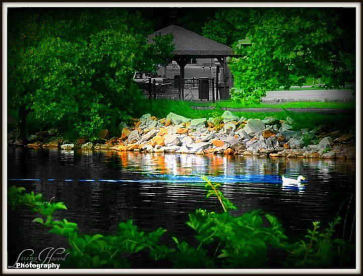 Duck Swimming in Lake - Latanya Maples Art