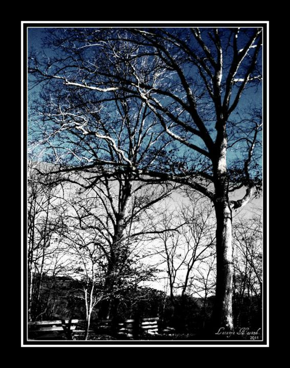 Tree and Wooden Fence - Latanya Maples Art
