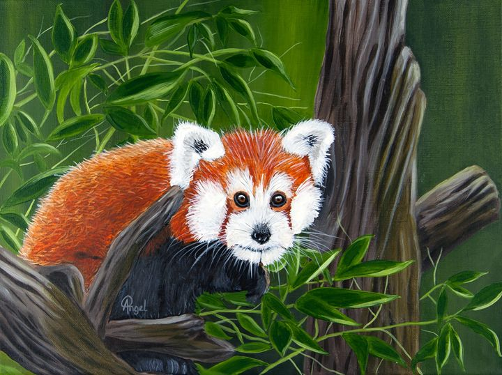 Sly The Fox - Angelo Pietrarca