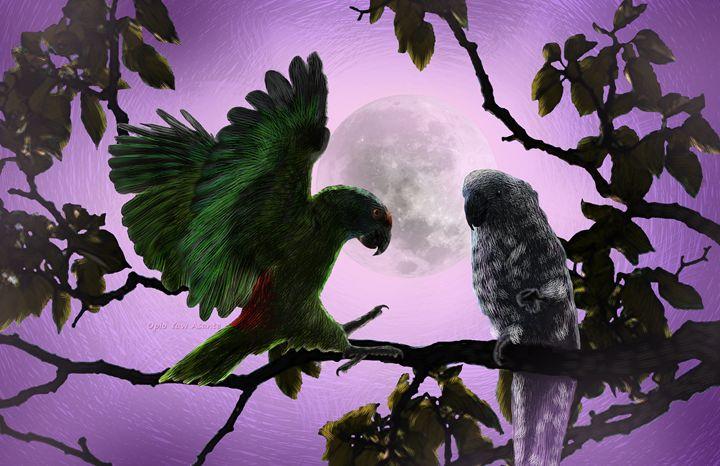 Parrots - Opio Yaw Asante