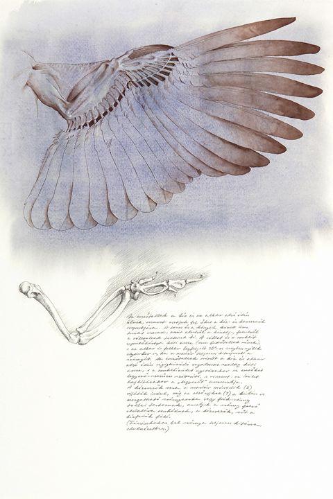 The Underside of the Pheasant Wing - Attila Meszlenyi