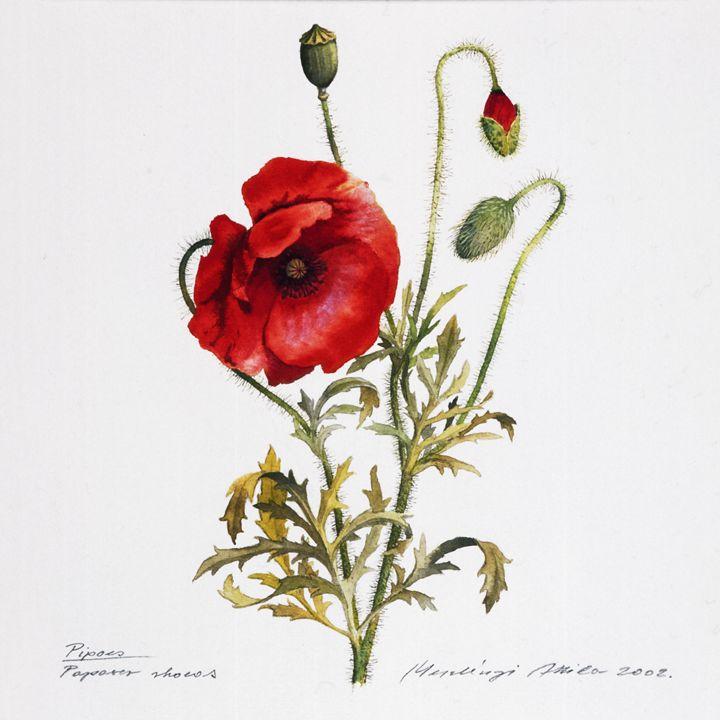 Poppy - Attila Meszlenyi