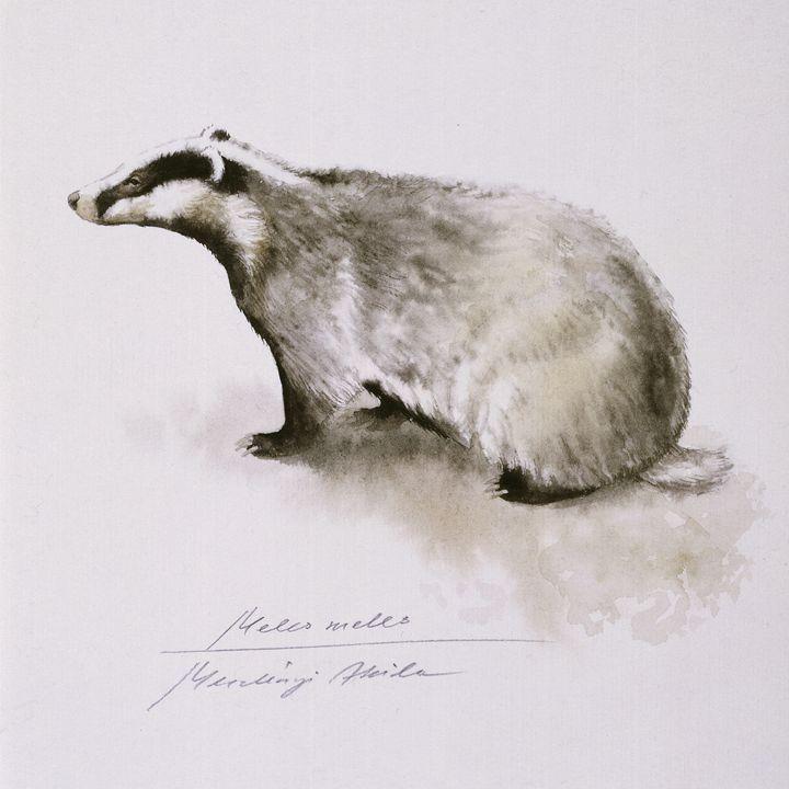 Badger, watercolor - Attila Meszlenyi