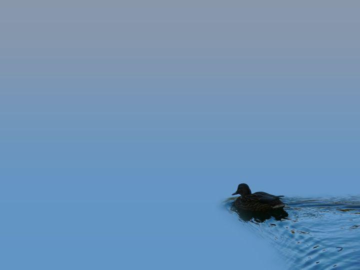 Swimming Duck - Attila Meszlenyi