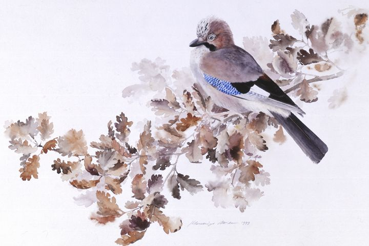 Jay on a Dried Oak Branch - Attila Meszlenyi