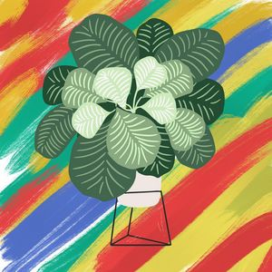 Homely monstera
