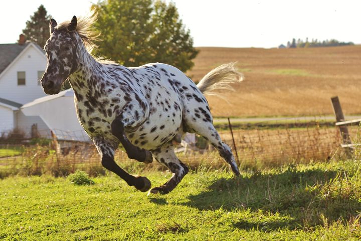 The Horse 12 - Ryan Earl