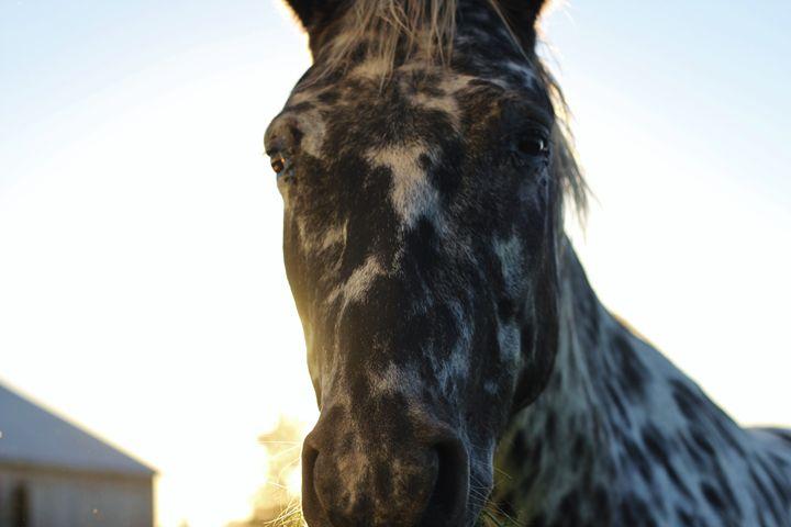 The Horse 7 - Ryan Earl