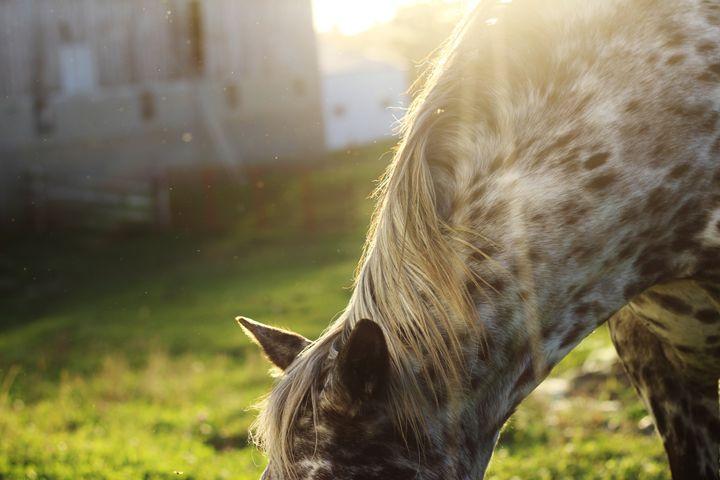 The Horse 6 - Ryan Earl