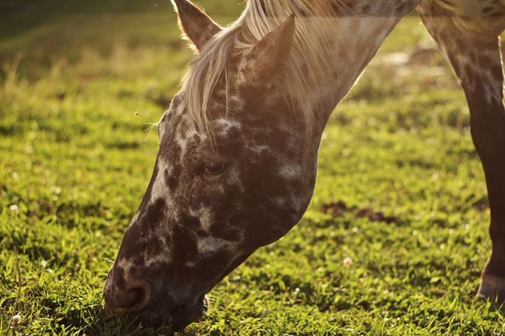 The Horse 5 - Ryan Earl
