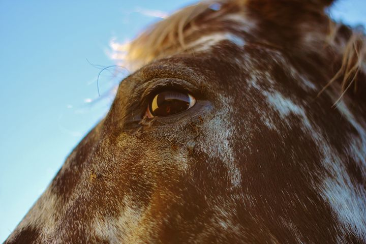 The Horse 4 - Ryan Earl