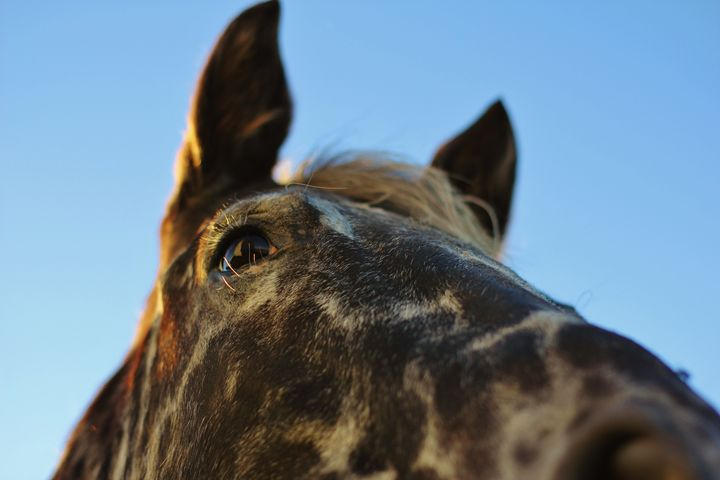 The Horse 3 - Ryan Earl