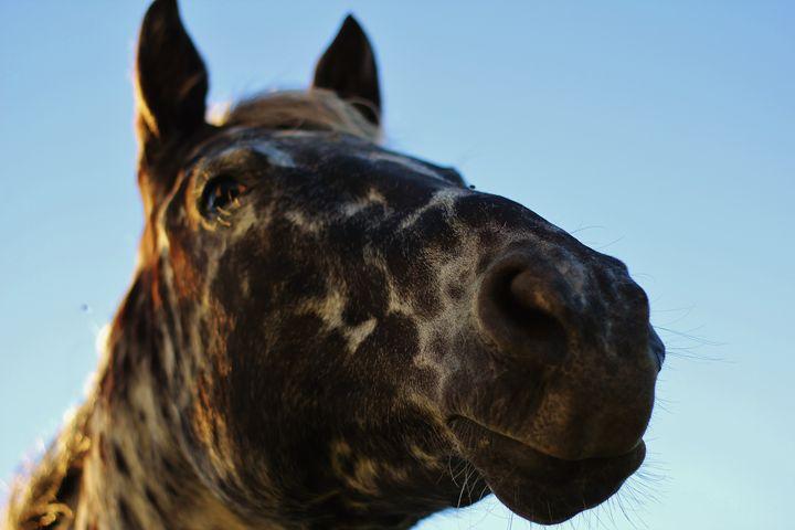 The Horse - Ryan Earl