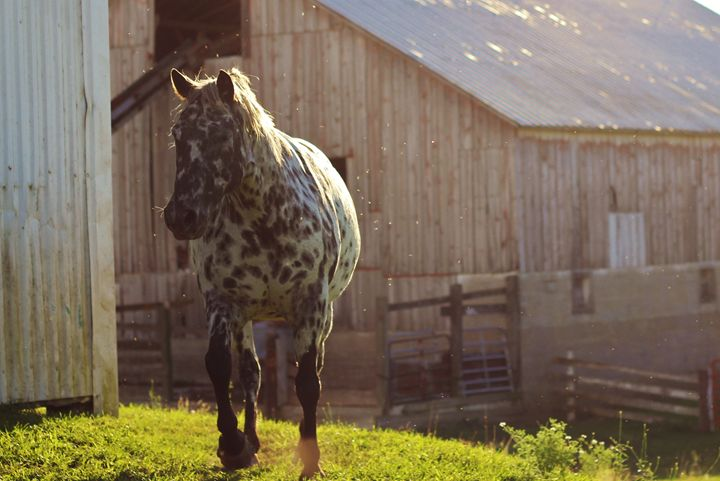 The Horse 14 - Ryan Earl