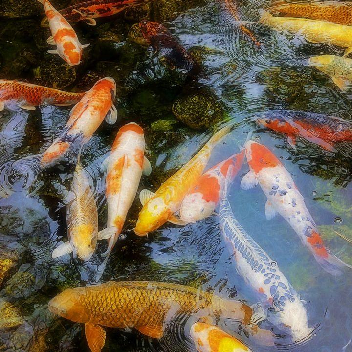 The Good Luck Pond - Mariemixx