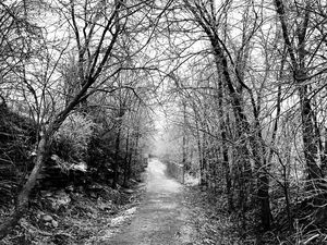 The Frozen Path