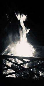 Bird from the fire