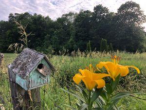 The Green Bird House
