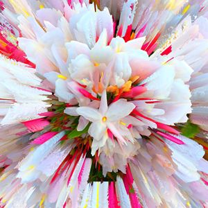 Flowers of Purity