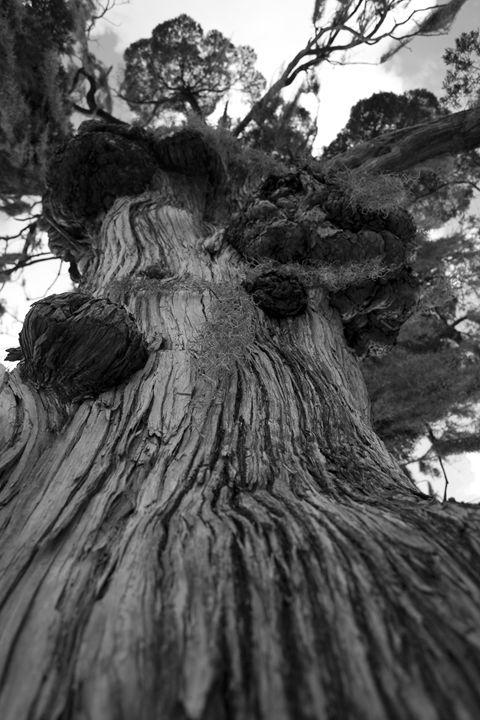 The Tampa Florida Tree - Random Art House