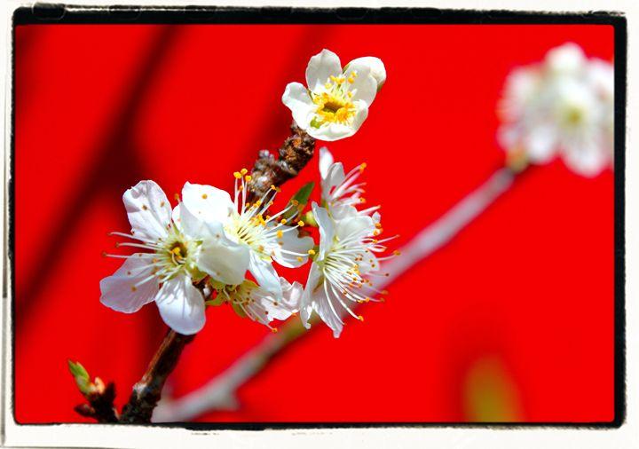 Suddenly The Bees Are Heard - EricBuechel.Net