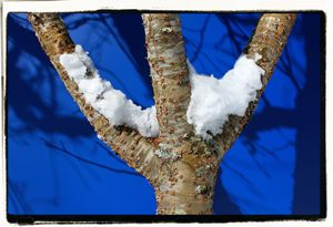 Snow Branches - EricBuechel.Net