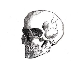 skeletal skull