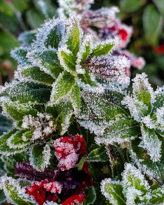 Frosty Morning - Nature and Dogs