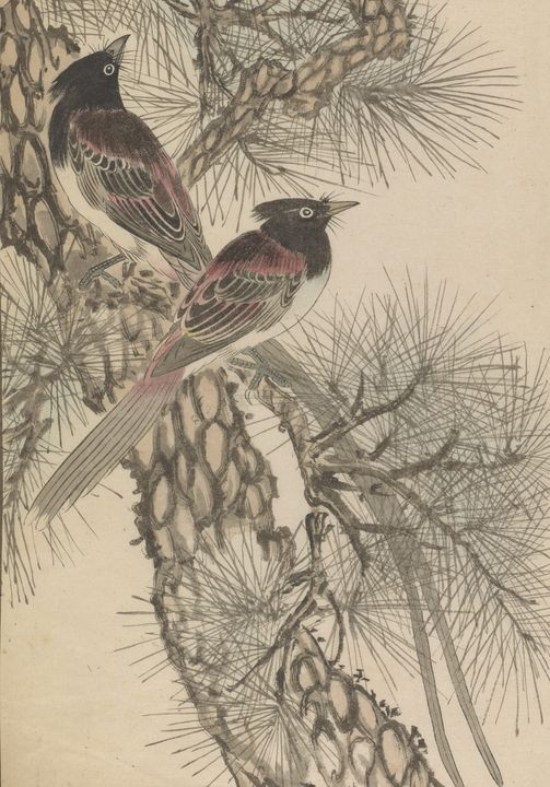 Imao Keinen~Jay Birds On Pine Page F - Classical art