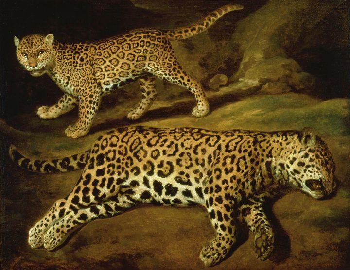Jacob Gerritsz. Cuyp~Two Jaguars - Classical art
