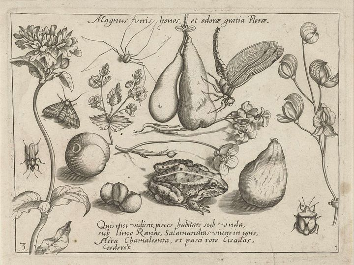 Jacob Hoefnagel~Dieren, bloemen en v - Classical art