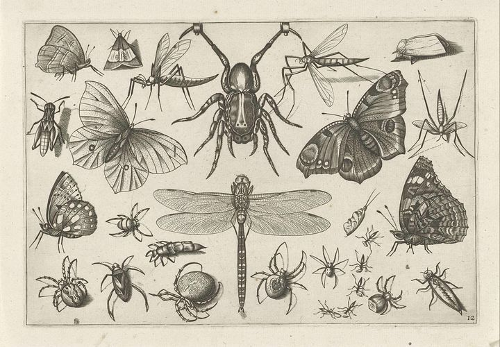 Jacob Hoefnagel~Insecten - Classical art