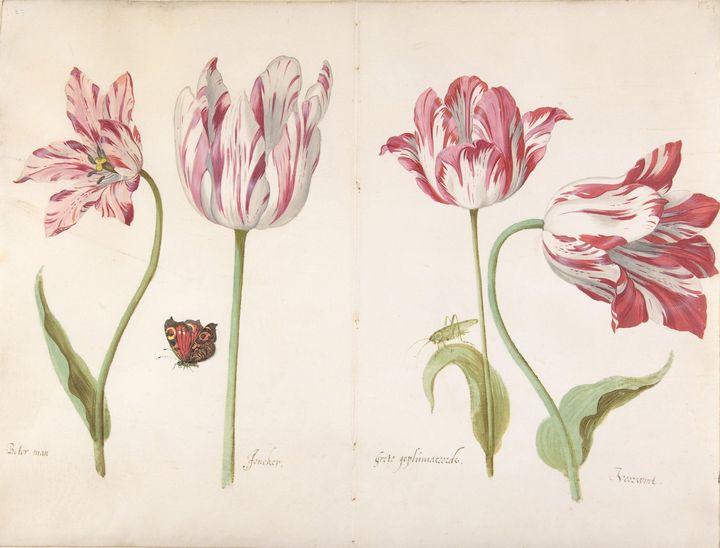 Jacob Marrel~Four Tulips Boter man ( - Classical art