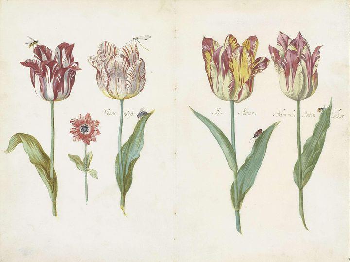 Jacob Marrel~Sheet from a Tulip Book - Classical art