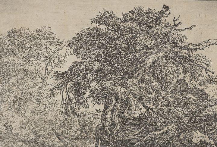 Jacob van Ruisdael~The Great Beech ( - Classical art