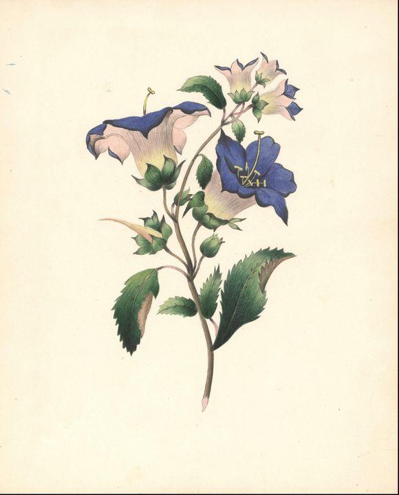 Joanna Vark Kellinger (1834-1916)~Fl - Classical art