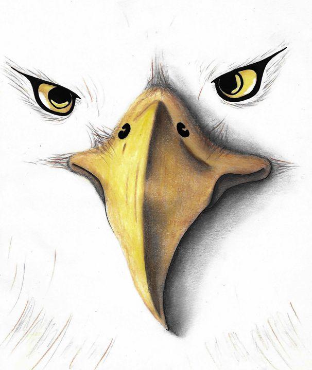 Bald Eagle - Ariel Stafford