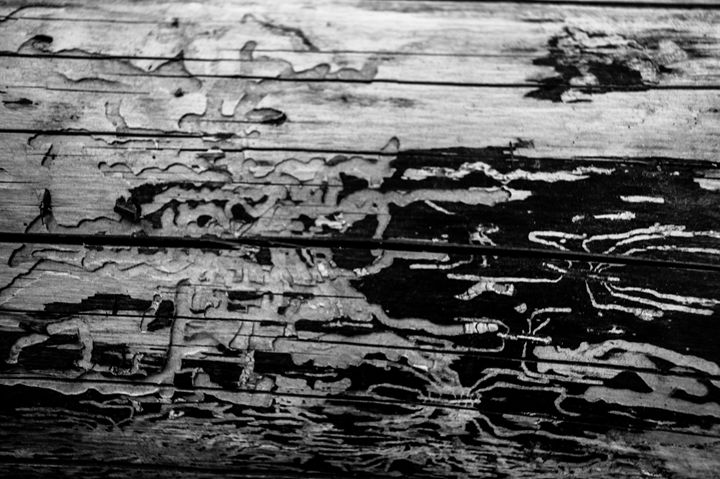 Termite Mazes - Ariel Stafford