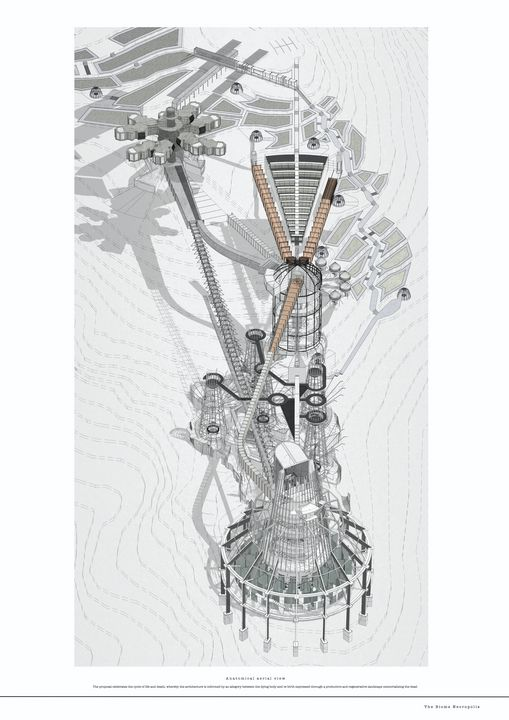07 - Anatomical aerial view - NaomiElizabeth Studio