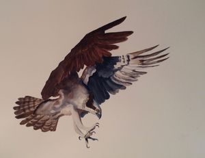 Osprey - Karin Minshull Original Watercolor paintings